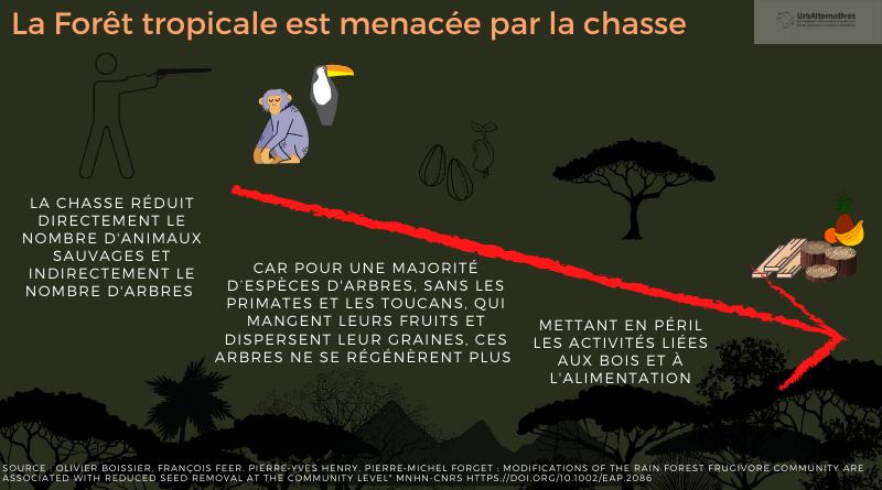 La forêt tropicale est menacée par la chasse
