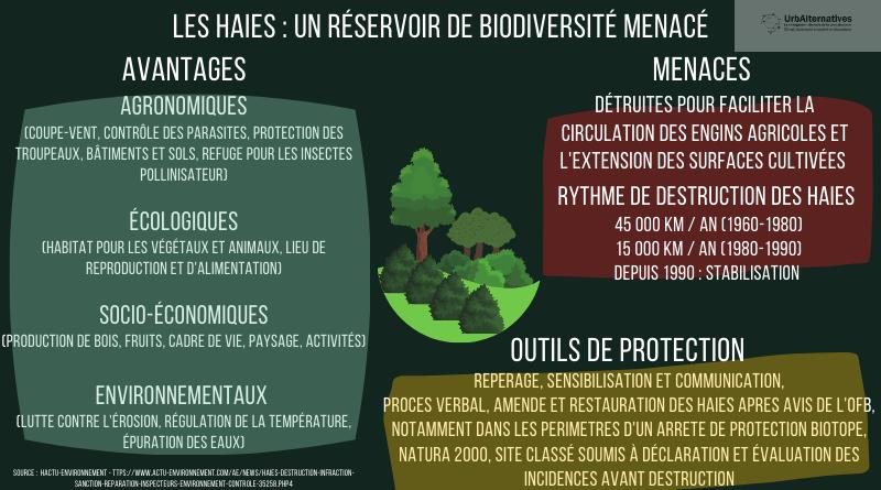 Les haies : un réservoir de biodiversité menacé