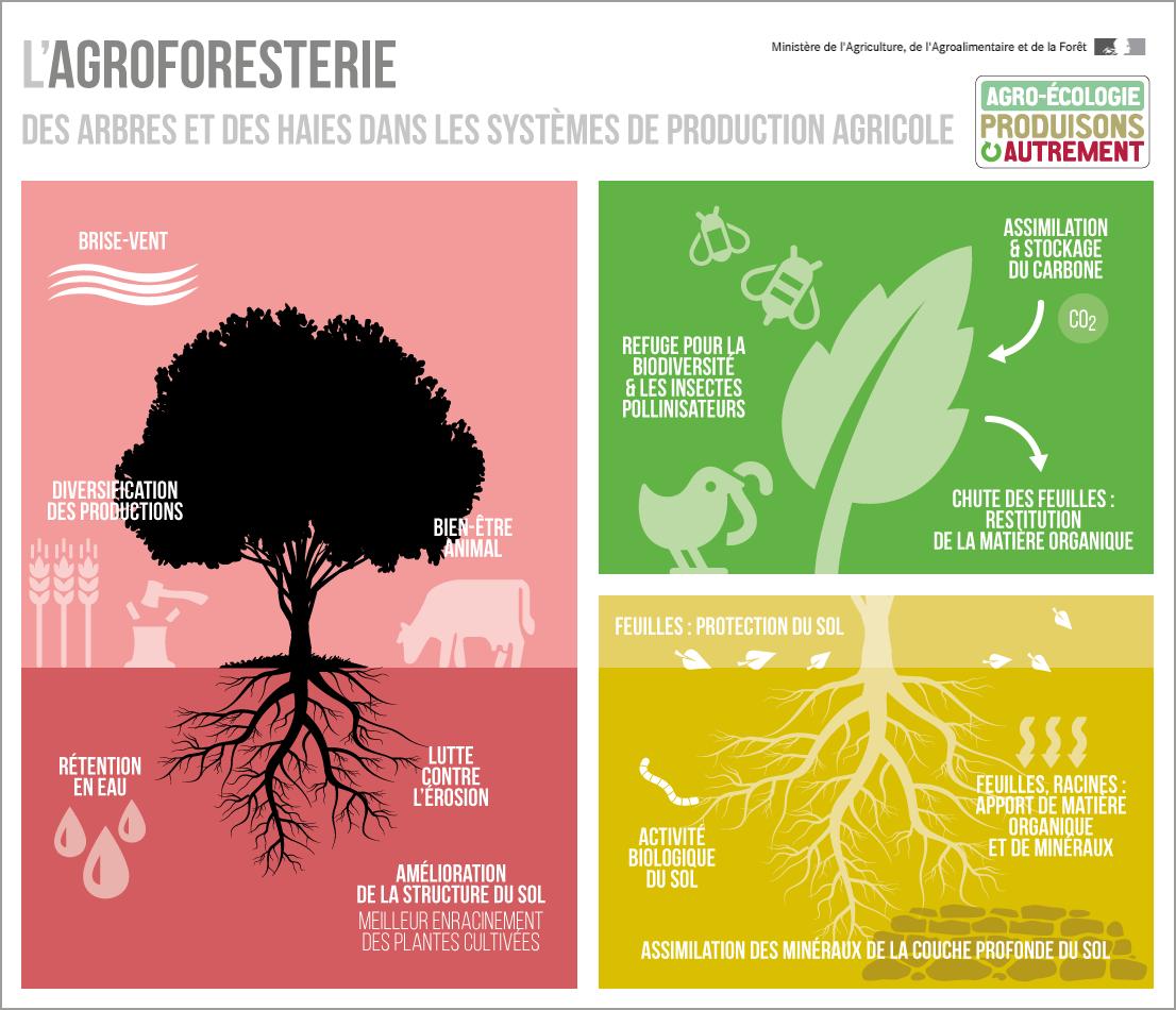 L'agroforesterie [Ministère de l'Agriculture et de l'Alimentation]
